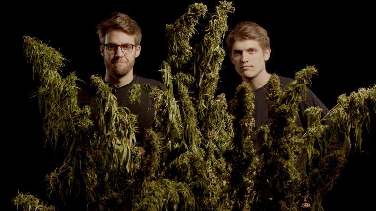 Przystępna dawka wiedzy o medycznej marihuanie i nie tylko…